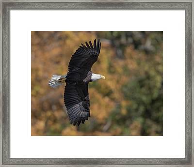 Fall Flight Framed Print