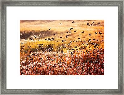 Fall Flock Framed Print