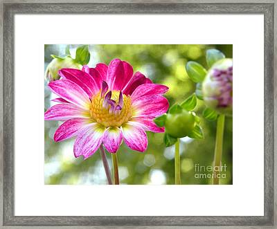 Fall Flower Garden Framed Print by Christine Belt