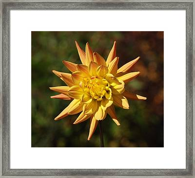 Framed Print featuring the photograph Fall Flower by Richard Bryce and Family