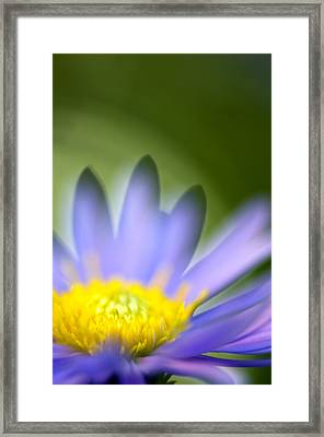 Fall Flower Framed Print