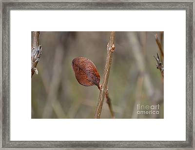 Fall Foliage 1 Framed Print