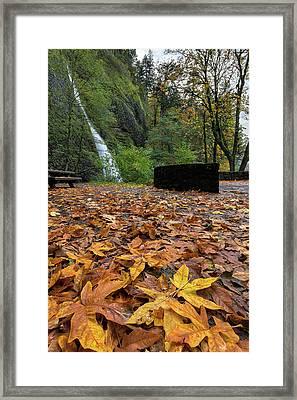Fall Foliage At Horsetail Falls Framed Print by David Gn