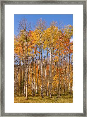 Fall Foliage Color Vertical Image Framed Print by James BO  Insogna