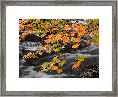 Fall Foliage In Acadia National Park  Framed Print by Juergen Roth