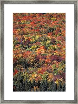 Fall Foliage In New Hampshires White Framed Print by Richard Nowitz