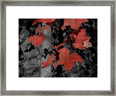 Fall Foliage In Pennsylvania Framed Print by Bob Hahn