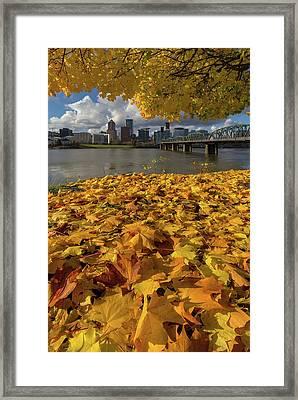 Fall Foliage In Portland Oregon City Framed Print