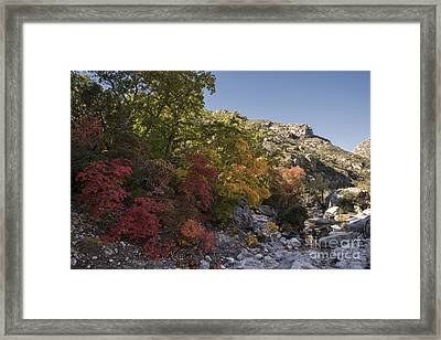 Fall Foliage In The Guadalupes Framed Print by Melany Sarafis