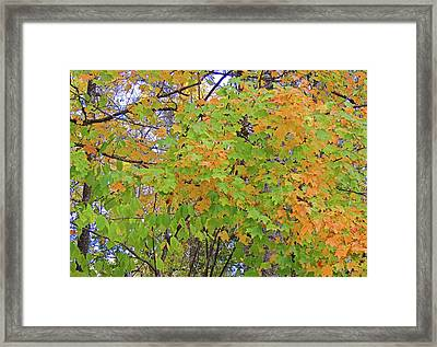 Fall Foliage In The Smokies Framed Print by Marian Bell