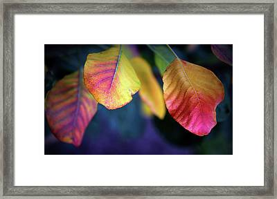 Fall Foliage Framed Print by Jessica Jenney