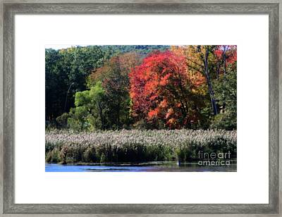 Framed Print featuring the photograph Fall Foliage Marsh by Smilin Eyes  Treasures