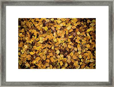 Fall Foliage Nature Pattern Framed Print by Frank Tschakert