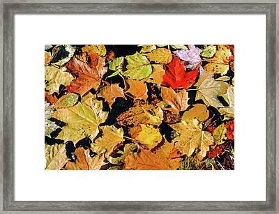 Fall Foliage On Water Framed Print by Morris Finkelstein