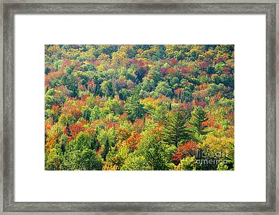 Fall Forest Framed Print by David Lee Thompson