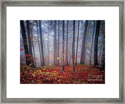 Framed Print featuring the photograph Fall Forest In Fog by Elena Elisseeva