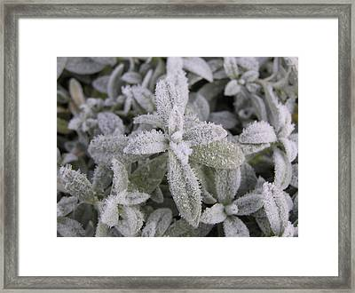 Fall Frost On Plants Framed Print by Richard Mitchell