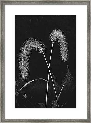Fall Grass 2 Framed Print