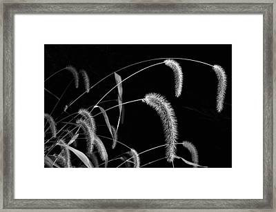 Fall Grass 3 Framed Print