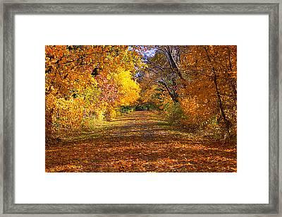 Fall Framed Print by Gwen Allen