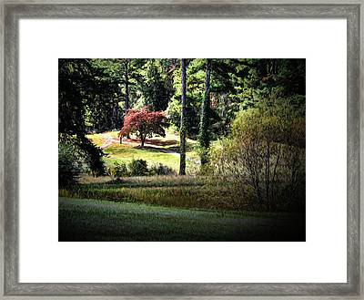Fall In Alabama Painting Framed Print by Judy Vincent