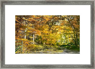 Fall In Bruceton Mills Forest Framed Print