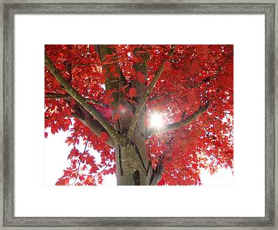 Fall In Georgia Framed Print by Linda Russell