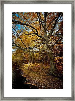 Fall In Pennsylvania Framed Print