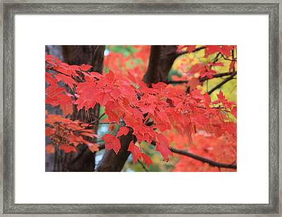 Fall In Red Framed Print