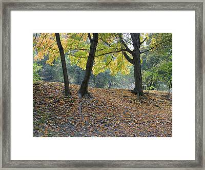 Fall In Stony Brook Framed Print by Raju Alagawadi