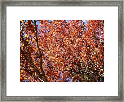 Fall In The Blue Ridge Mountains Framed Print