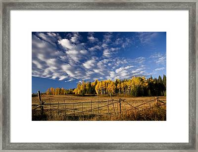Fall In The Cariboo Framed Print