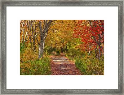 Fall In The Maritimes Framed Print by Roger Lewis