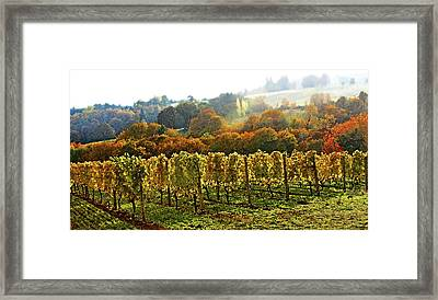 Fall In The Red Hills Of Dundee Framed Print by Margaret Hood