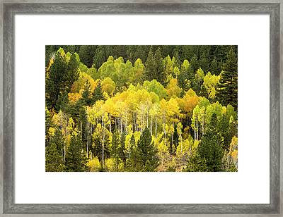 Fall In The Sierras Framed Print