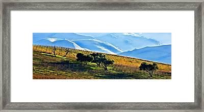 Fall In The Vineyard Framed Print