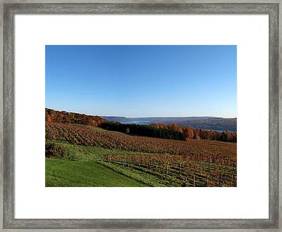 Fall In The Vineyards Framed Print