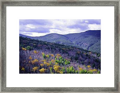 Fall In The White Mountains Framed Print