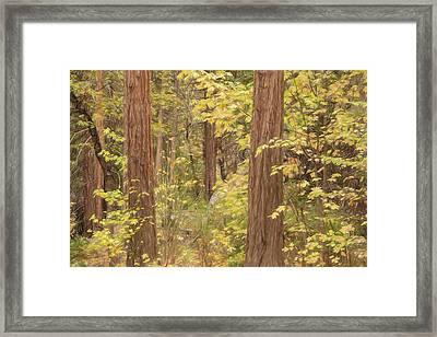 Fall In Yosemite Framed Print