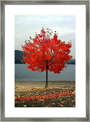 Fall Is Here Framed Print by Dennis Curry
