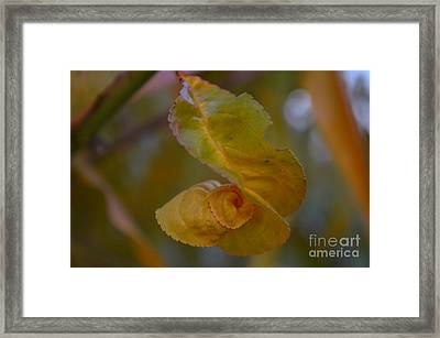 Fall Is Joy Framed Print by Eva Maria Nova