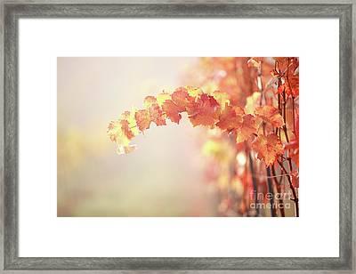 Fall Framed Print by Jana Behr
