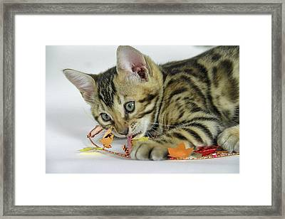 Fall Kitten Framed Print by Shoal Hollingsworth
