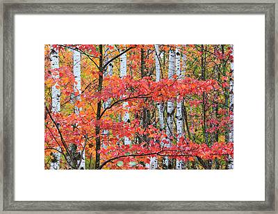 Fall Layers Framed Print