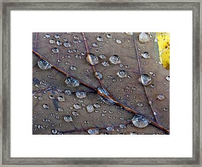 Fall Leaf Framed Print by Juergen Roth
