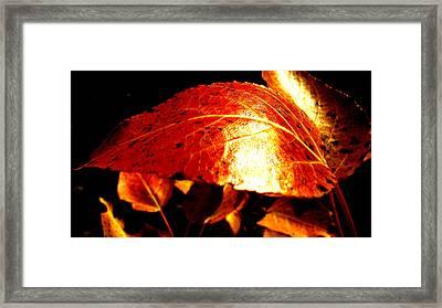 Fall Leafs Framed Print by Neshka Muchalska