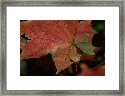 Fall Leaves 1 Framed Print by Eric Workman