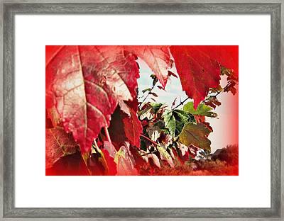 Fall Leaves #10 Framed Print