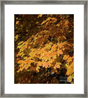 Fall Leaves 10 Autumn Leaf Colors Art Framed Print