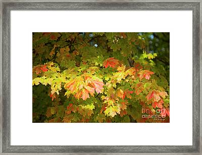 Fall Leaves 11 Autumn Leaf Colors Art Framed Print